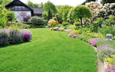Rasenrenovation –  Tipps für einen schönen Rasen