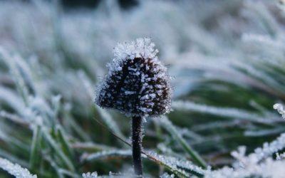 Frostschäden – Was tun?