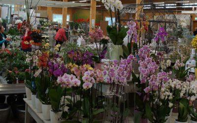 Orchideenpflege – so bringt man sie zum blühen