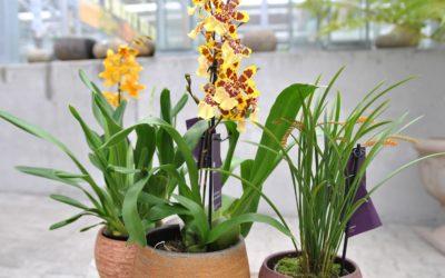 Orchideen Ausstellung 14.- 28. März 2020