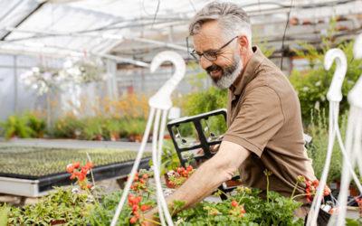 Unsere Gärtnerei unsere 5* Produktion