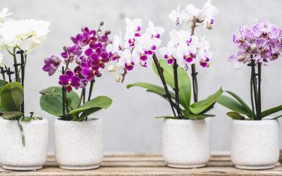 27. Februar Orchideen Umtopfaktion